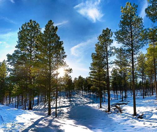 arizona sun forest landscape shadows showlow