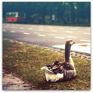 Damn, I missed the bus again, there goes my golden egg.... | by Aikaterini Koutsi Marouda aka kotsifi