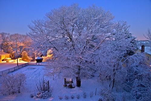 snow tree ma massachusetts marshfield rexhame 20jan2012 atreegrowsinrexhame