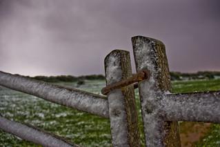 Neu damunt ses barreres d'ullastre