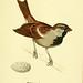 Atlas de poche des oiseaux de France, Suisse, et Belgique, utiles ou nuisibles. ser.1
