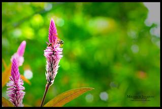 litle bee n bokeh | by savannahfotografi