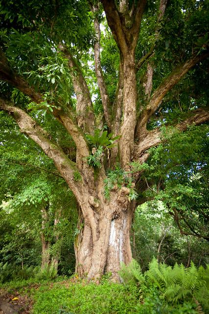 Haleakala National Park 4960