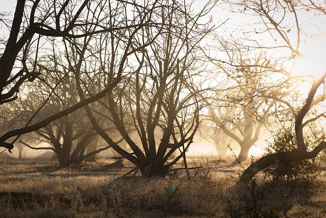 Coyote Fog 0449