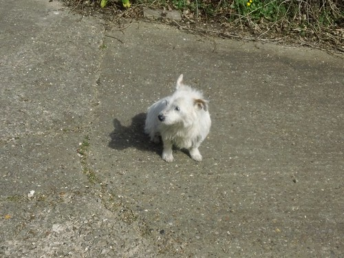 """""""No I won't bark - seen it all before.'' Lovely little farm dog, quite long in the tooth but friendly. (Near Ashurst)."""