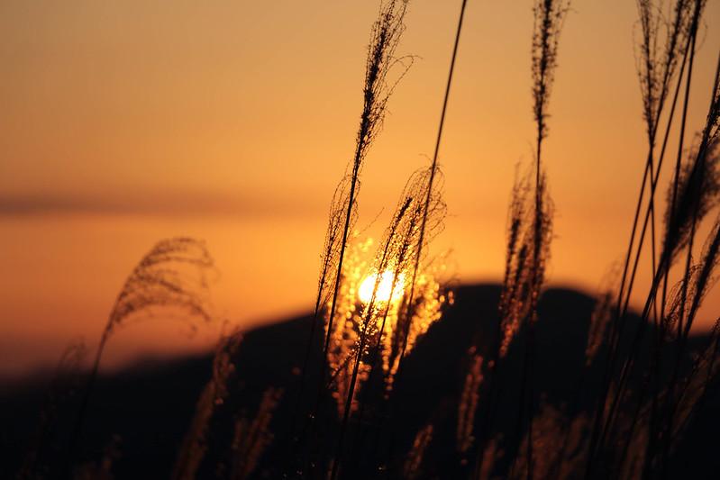 曽爾高原 日の出