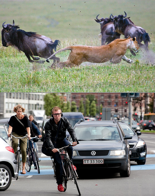 Copenhagen Bikehaven by Mellbin - Bike Cycle Bicycle - 2011 - 2964