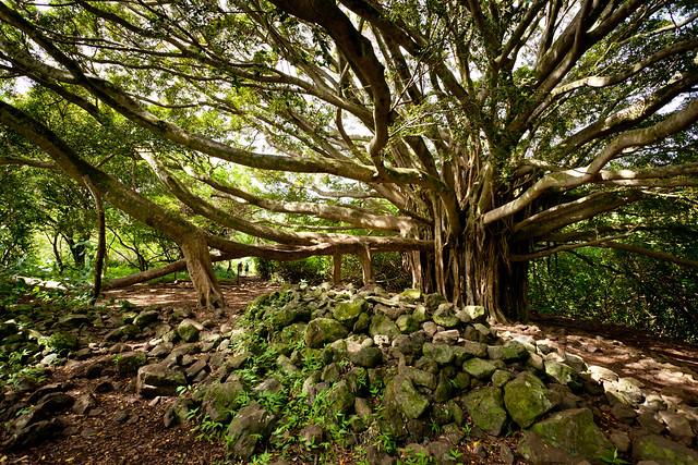 Haleakala National Park 4939