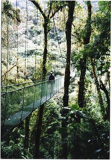Canopy skywalk in Monteverde (Costa Rica 2000)
