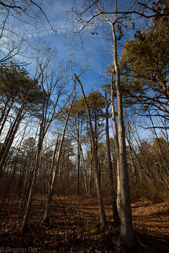trees winter sky cold forest reaching wideanglelens