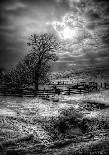 winter bw usa snow storm tree water clouds sunrise landscape virginia nikon monotone pastoral loudouncounty blackwhitephotos tomlussier