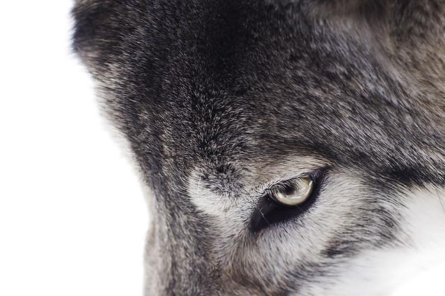 Big Run Wolf Ranch - Lockport, IL