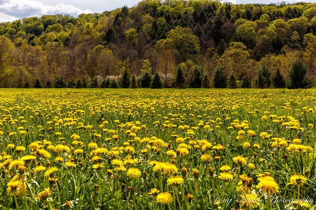Spring in Pomfret Vermont