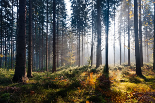 morning sun in the forest | by skoeber