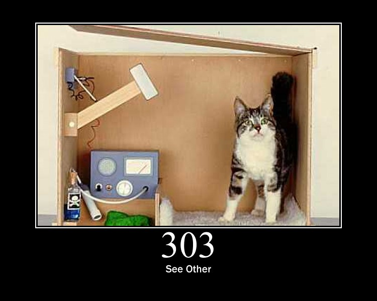 303 - See Other   Schrödinger\u0027s cat The response to the requ\u2026   Flickr