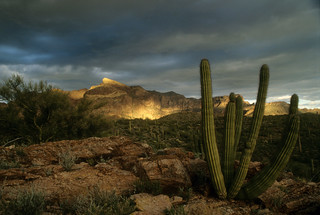 Organ Pipe Cactus National Monument | by platours_flickr