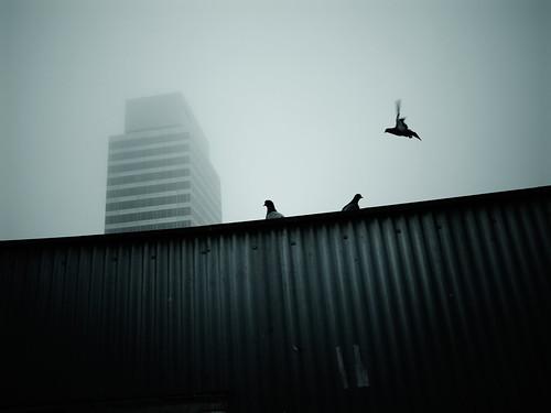 Urban goblins   by pushreset