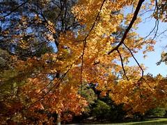 日, 2010-11-07 12:56 - New York Botanical Garden (Bronx)ブロンクスの NY植物園紅葉