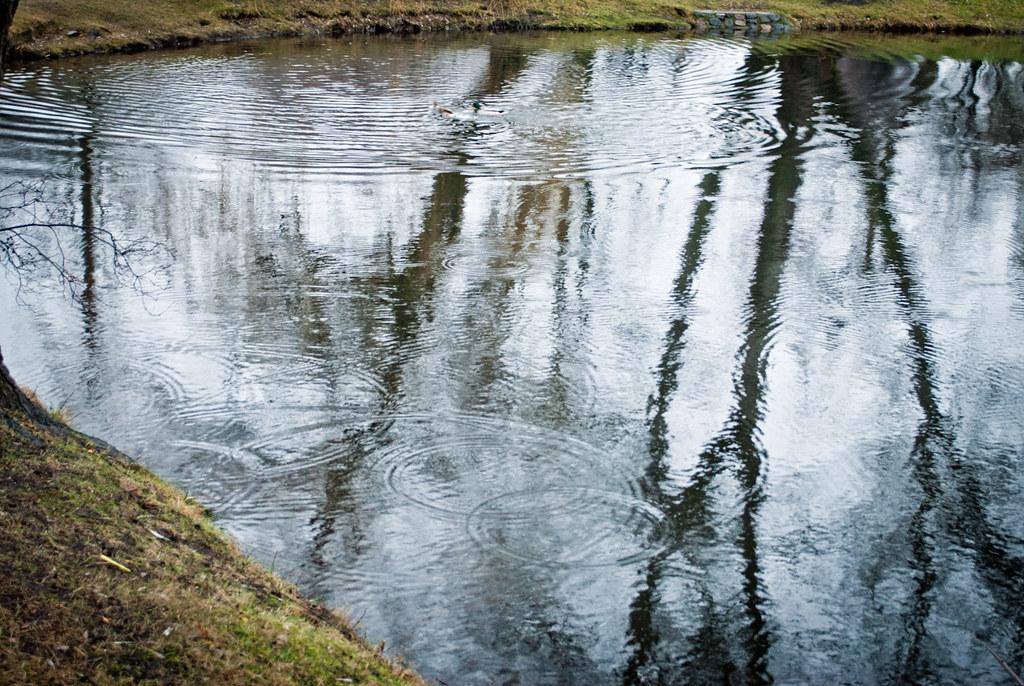 ...вода,наблюдающая за деревьями... DSC_0574