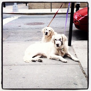 Yearly Birthday Dogs - Happy Tenth Birthday to Frisket and Sailor   by epc