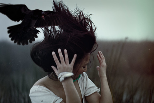 One Crow Left of a Murder (#9217) | by mark sebastian