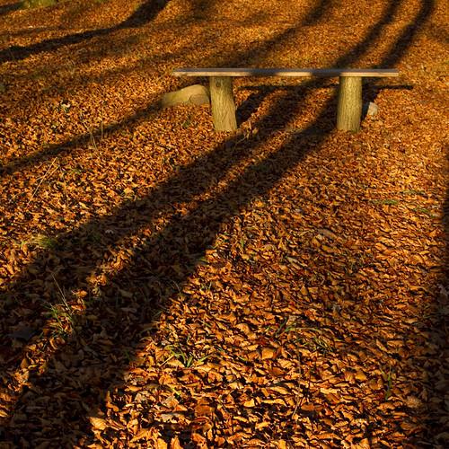 wood autumn trees fall leaves forest bench skåne shadows sweden sverige canonef35mmf2 beech canoneos7d förslöv