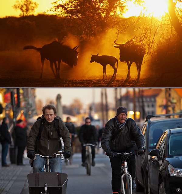 Copenhagen Bikehaven by Mellbin - Bike Cycle Bicycle - 2011 - 2962