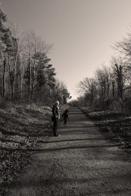 Alfriston forest