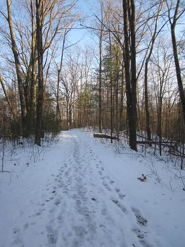 winter lake snow newyork tree ice footbridge saratoga upstate marsh treestump wetland frozenpond moreaulakestatepark 011412