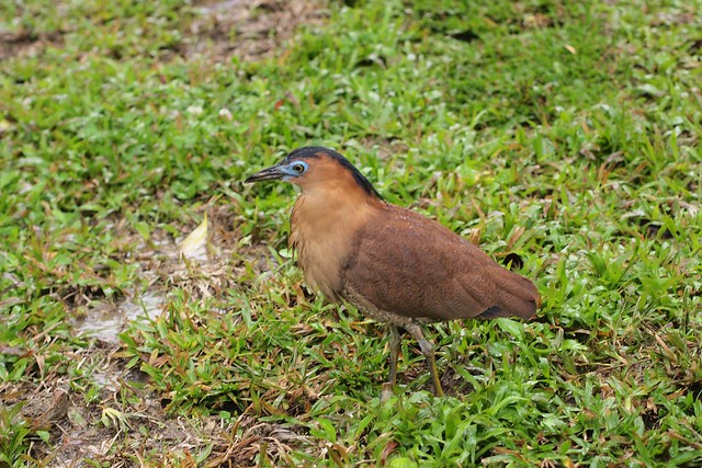 Bird in Taiwan