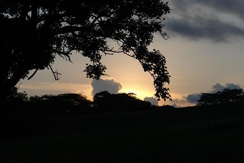 africa sunset sky plant tree nature kenya nairobi gigiri 09locationgeotag 03content