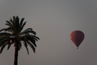 Balloon and palm tree   by Dennis Wright