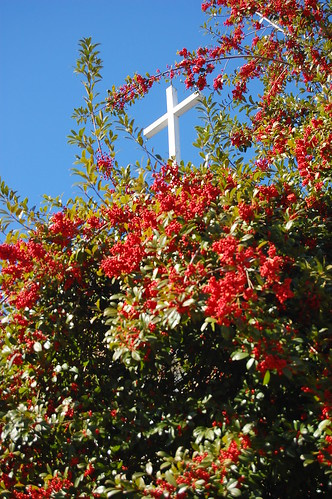 Cross and Holly | by Donald Lee Pardue
