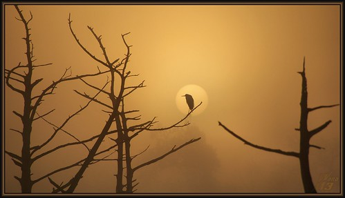 park sun nature fog sunrise texas canoe bayou pasadena egret bayareapark armandbayou wanam3
