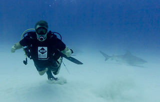 Swimming with the sharks - literally | by John White