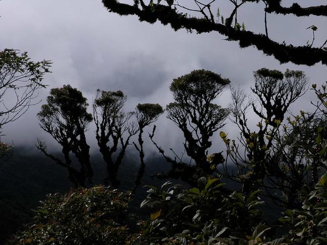 Trees and clouds - Árboles con nubes; Siberia Mountains Cloud Forest, above Parque Nacional Carrasco, Cochabamba, Bolivia