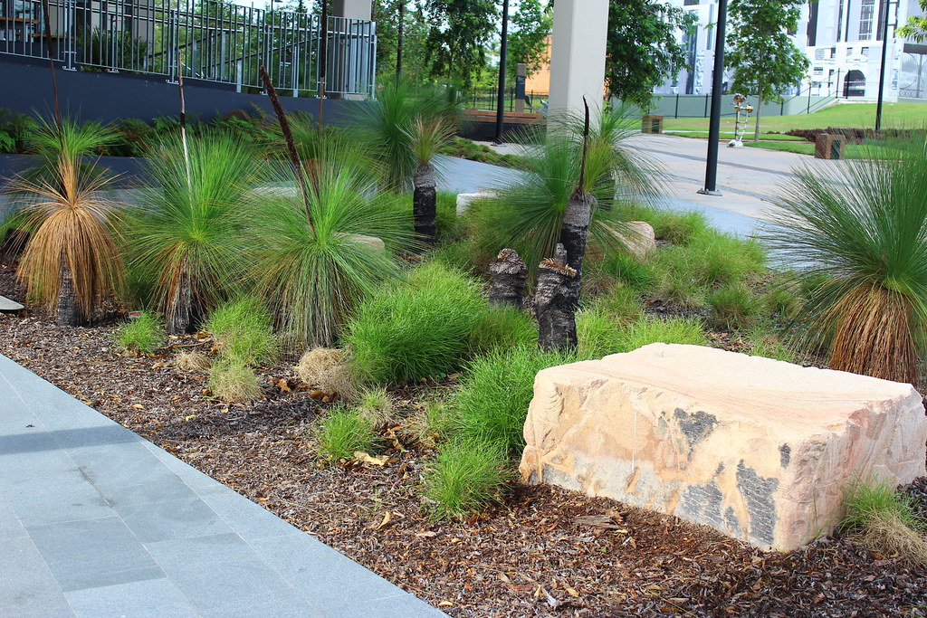 Amenity planting of grass,trees (Xanthorrhoea) in Brisbane