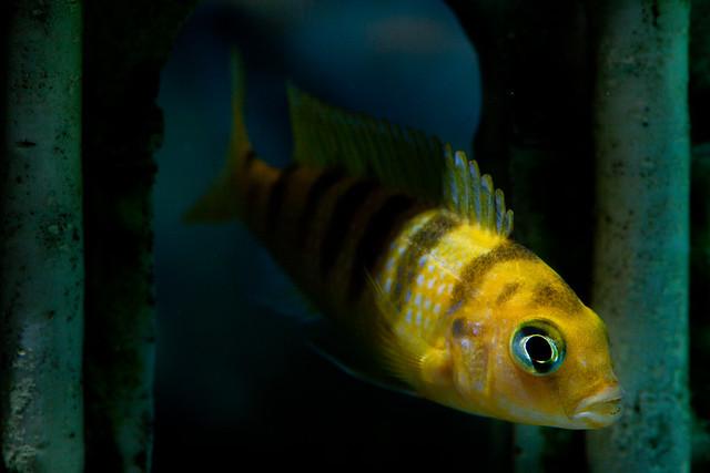 Fishies 2301