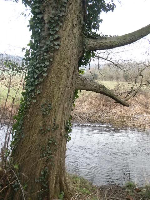 Tree by the Darenth Eynsford Circular