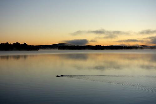morning light lake water sunrise landscape sweden outdoor ducks serene waterscape