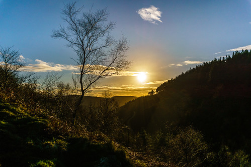 landscape anewman alannewman decymru an1 pegwnybwlch casnewydd an1uk trees tree sunset newport outdoors an1photography cwmcarn southwales cymru risca wales unitedkingdom gb