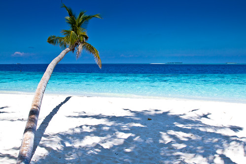 sea postcard indianocean palm palmtree maledives deepbluesea filitehyo