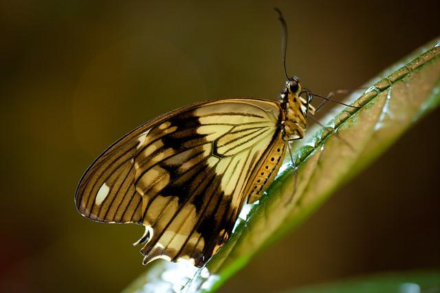 Butterfly Palace 9218