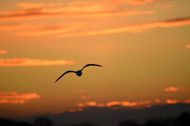 Soaring Into Sunset