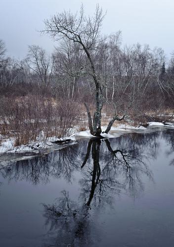 winter snow cold reflection ice grey day maine steuben washingtoncounty tunkstream downeastsunrisetrail pwwinter
