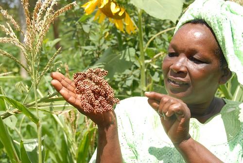 Kenyan woman holding sorghum