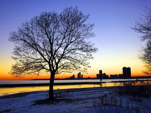 Tree at Sunnyside