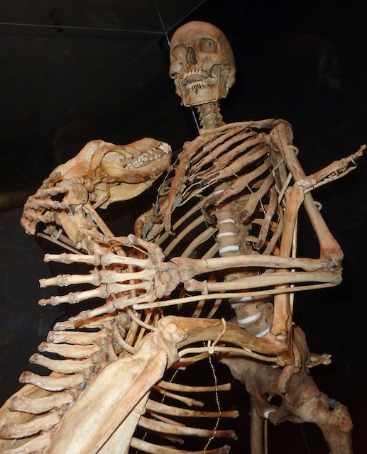 Skeletons of Dr. Grover Krantz and His Dog Clyde on Display at the Smithsonian Natural History Museum