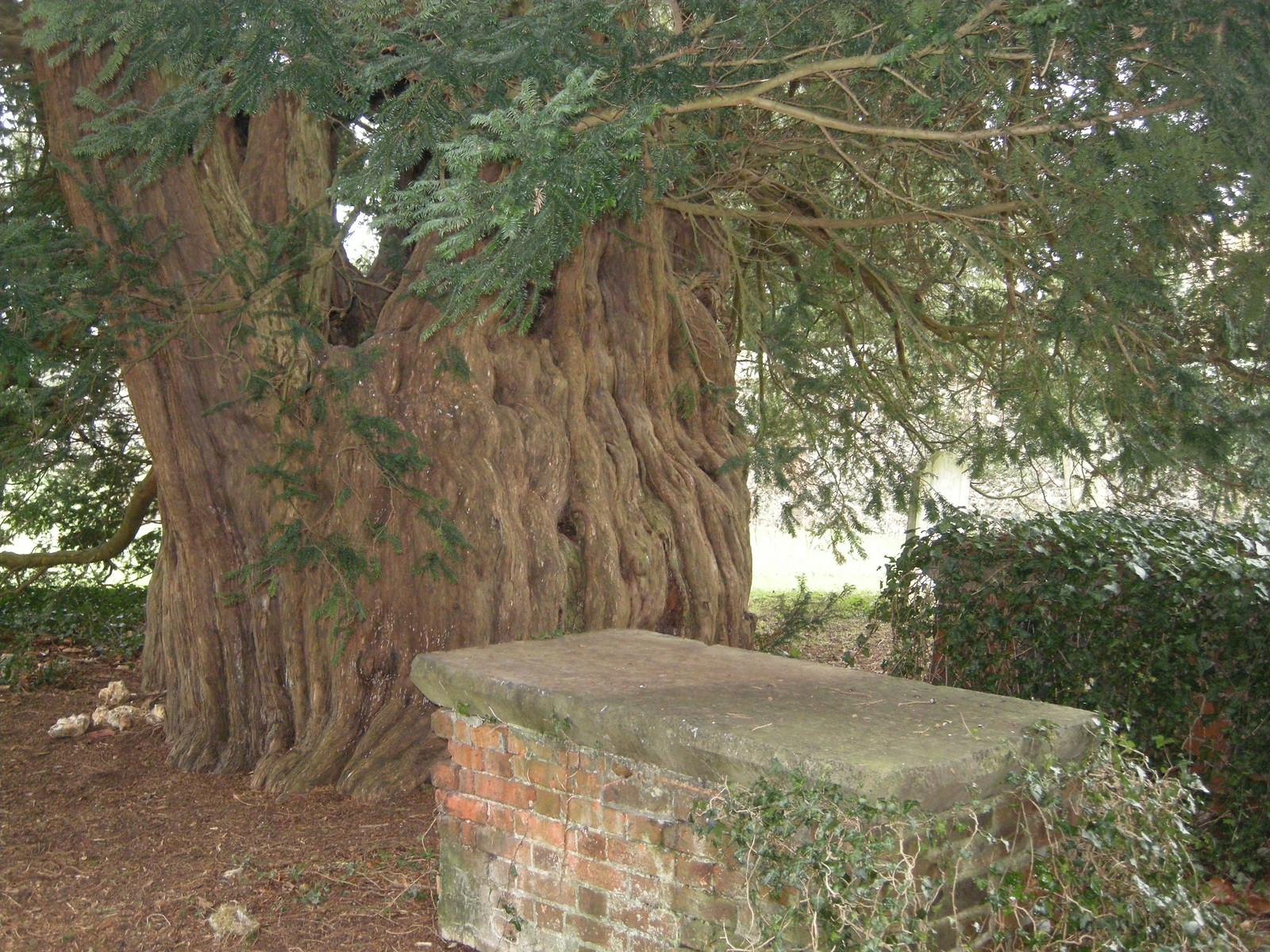 Cudham trees