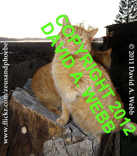 pink november sunset red orange usa pet tree green fall animal yellow cat nose photography mackerel ginger utah eyes feline outdoor tabby olympus whiskers phoebe gato stump provo 2011